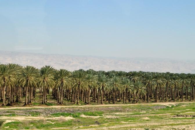 Date grove with Jordan Hills