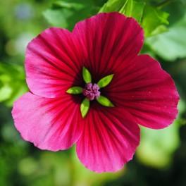 see through flower