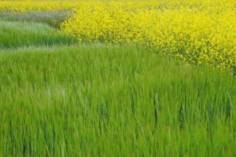 Day 2: Fields near cricklade